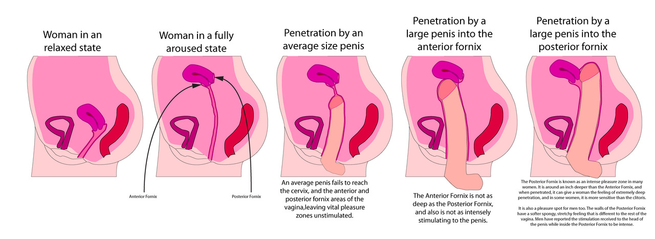 Penis vulva penetration
