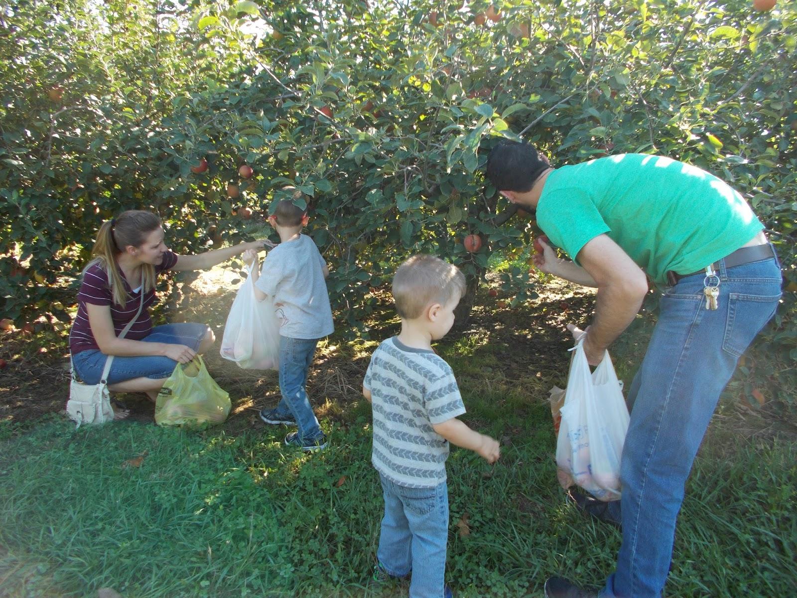 Sweet apples brenda