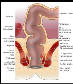 sex anal Sigmoid colon